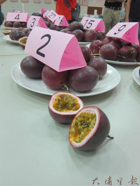 埔里鎮農會舉辦第3屆百香果評鑑,評審指出,今年產期延後,果粒普遍比往年小,但風味維持水準。(金城嚴攝)