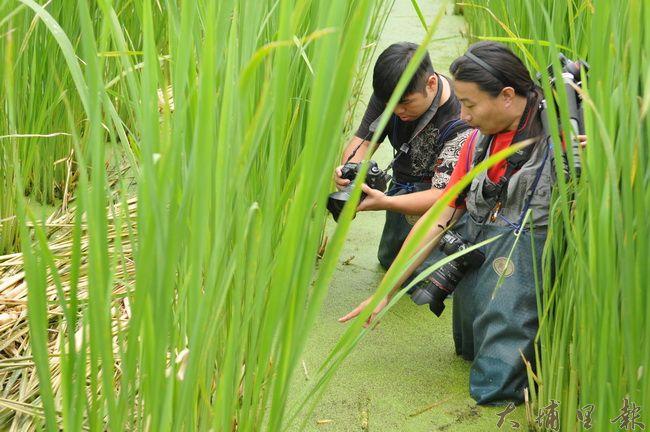 紀錄片導演劉又麒(右)與攝影師四象經常下茭白筍田,記錄田區的生態。(柏原祥攝)