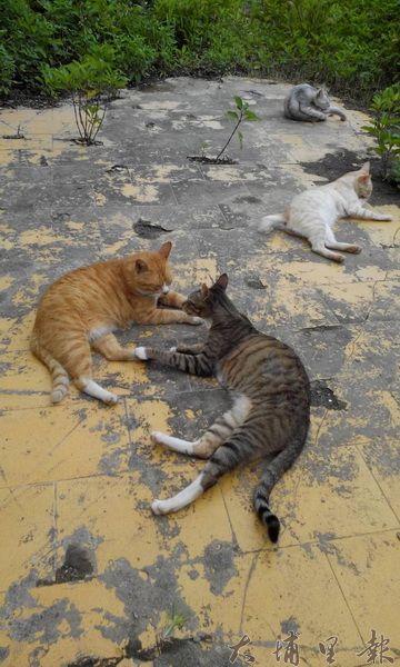 安置貓園,一般安置後會是送養、領養,安置單位都是無償照顧流浪動物,龐大照顧支出常常令許多單位難以持續運行。(圖片來源 https://goo.gl/N0tHKZ)