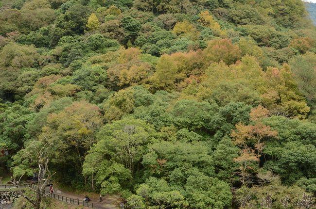 奧萬大森林遊樂區雖無巨木,但濃密的森林每年仍吸引不少遊客前來親近。(柏原祥攝)