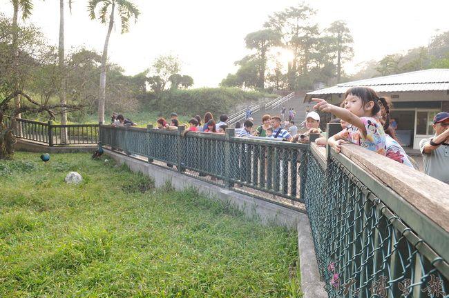 日月潭孔雀園因南投縣府BOT飯店而休園,許多家長帶著小孩來看最後一眼。