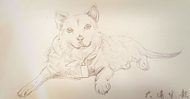 暨大校犬「喬妹」日前車禍過世,喜愛牠的學生,為牠畫了素描。(圖片來源/喬妹粉絲團、)