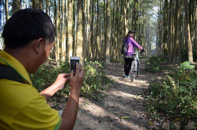 埔里黑森林是一大片黑板樹樹林而成,整齊的栽種看起來格外壯觀。(金城嚴 攝)