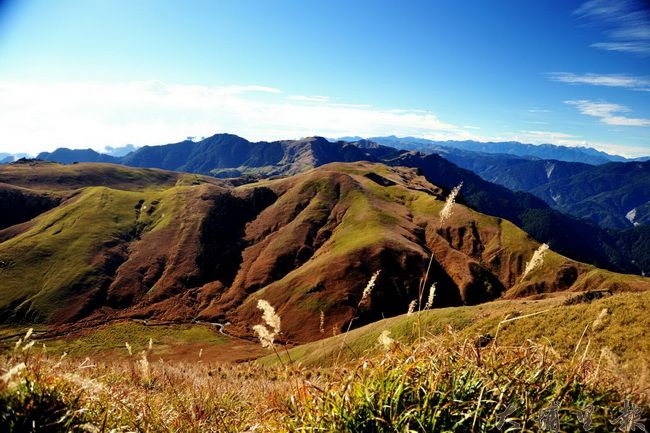 能高縱走沿途有美麗的高山草原,是國內熱門登山路線。(圖/林務局南投林管處提供)