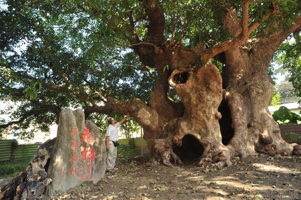 民宿主人吳宗憲買下茄苳樹王公旁的建物,並打開圍牆大門,讓人們可以親近老樹。(柏原祥 攝)