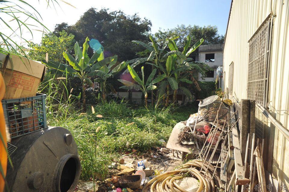 過去看千年茄苳樹王公,只能從廟旁的水利地防火巷進入遠觀,空地堆積垃圾,雜草叢生。(柏原祥 攝)