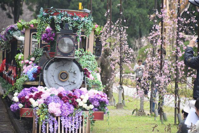 九族遊園小火車經過一旁滿開的枝垂櫻,花香撲鼻。(金城嚴 攝)