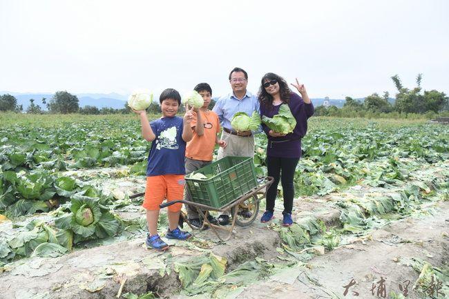 前來採收的埔里民宿業者,舉家到菜園挖寶。(金城嚴 攝)