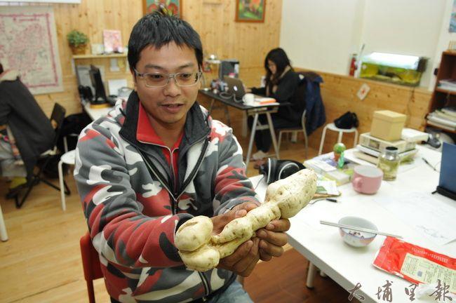 埔里青年農民詹羽辰挖出狀似男性生殖器的地瓜,尺寸相當碩大。(柏原祥 攝)