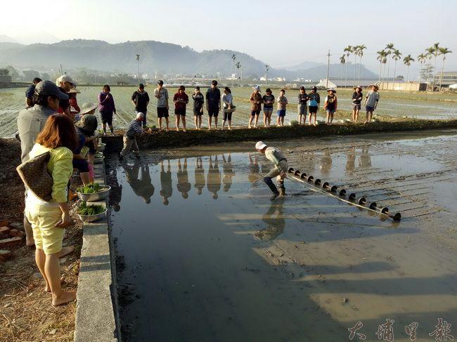 所有參加夏稻插秧體驗的人,圍著大阿伯示範為秧苗做距離間隔。(穀笠合作社提供)