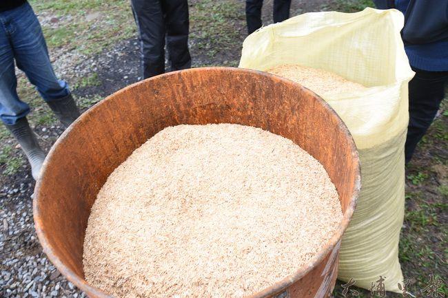 製作生物炭原料—稻殼,用自製鐵爐燃燒製作生物炭。(金城嚴攝)