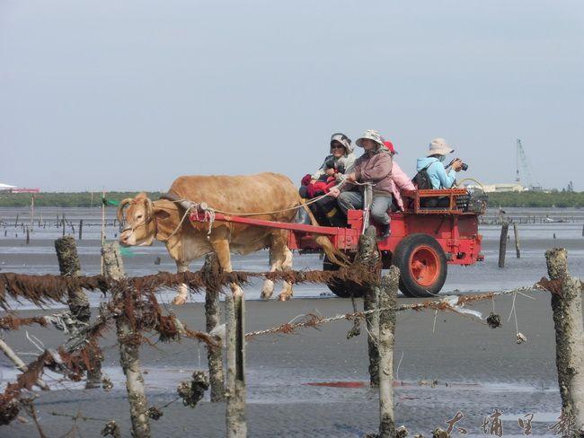 海牛採蚵是彰化縣芳苑鄉特有的產業文化。