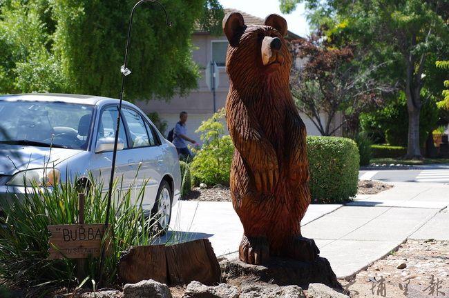 加州某社區大樹染病死亡,地主申請砍伐,政府准許後,地主特意保留樹幹和根(不挖除),把樹幹留下刻成一隻熊,每到節日時社區居民都會為它穿上衣服和裝飾,變成這社區新的社交中心。(陳里維 攝)
