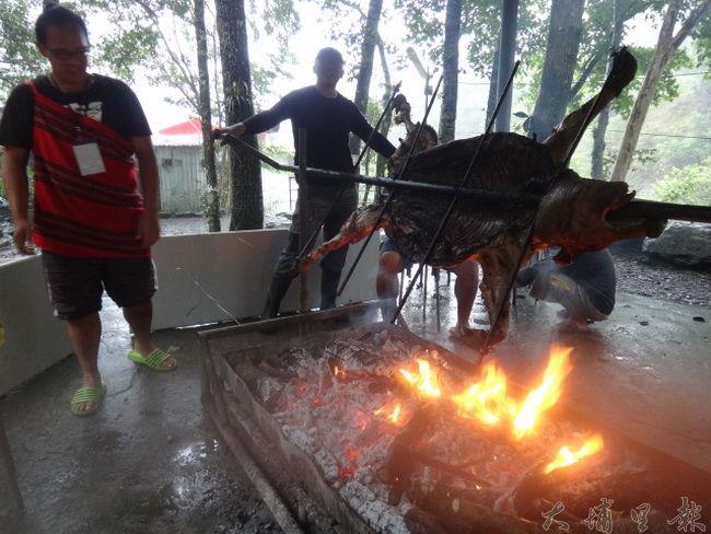 眉溪部落推展「巴萊豬」與綠生農場自然農業農作,以炭火烤全豬方式,要讓來賓品嚐在地食材的美味。(柏原祥 攝)