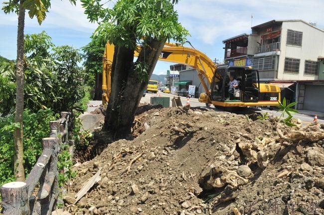 埔里鎮公所委託包商開挖,將南安路黑板樹、柳樹移植,原地將改種青楓。(柏原祥 攝)