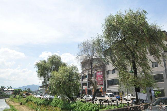 埔里鎮公所委託包商,將把南安路柳樹移植至福興里。(柏原祥 攝)