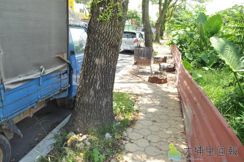 埔里鎮公所為改建信義路人行道,要移植60棵老樟樹,樹穴可看出空間不足,人行道被堆置雜物。(柏原祥 攝)