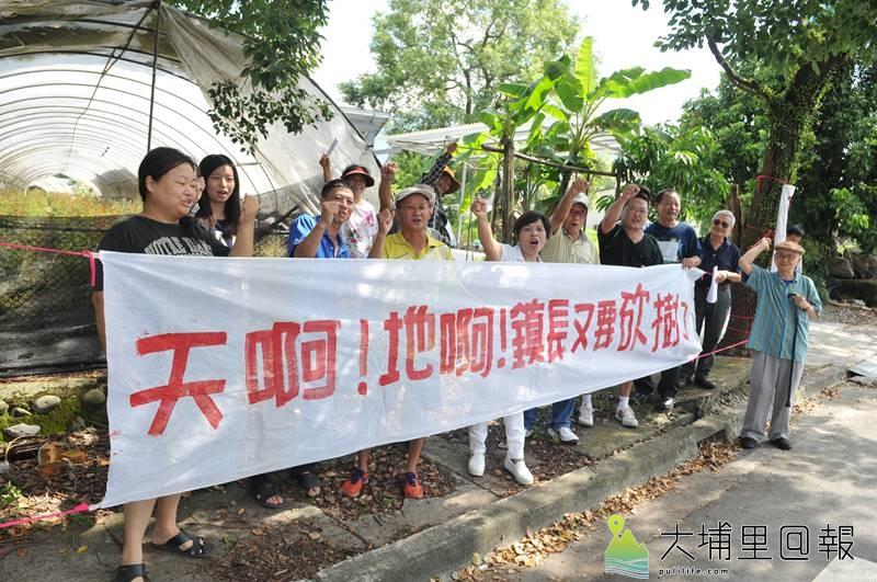 抗議埔里鎮公所不當移樹計畫的鎮民拉起白布條,要求公所保留老樹綠意與人行便利。(柏原祥 攝)