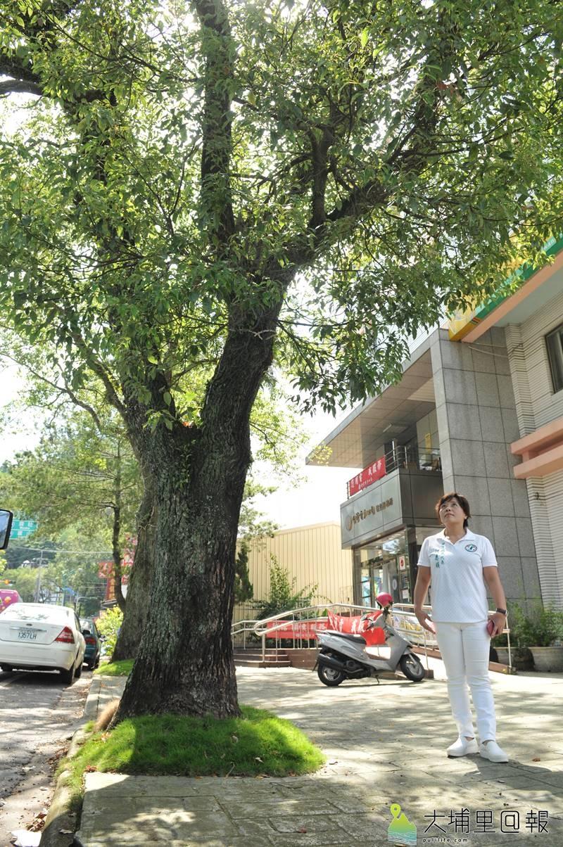 埔里鎮民代表何惠娟以信義路台電營運所人行道前樟樹為範例,表示只要用心規劃工程,行人絕對能保有綠意與安全的人行空間。(柏原祥 攝)