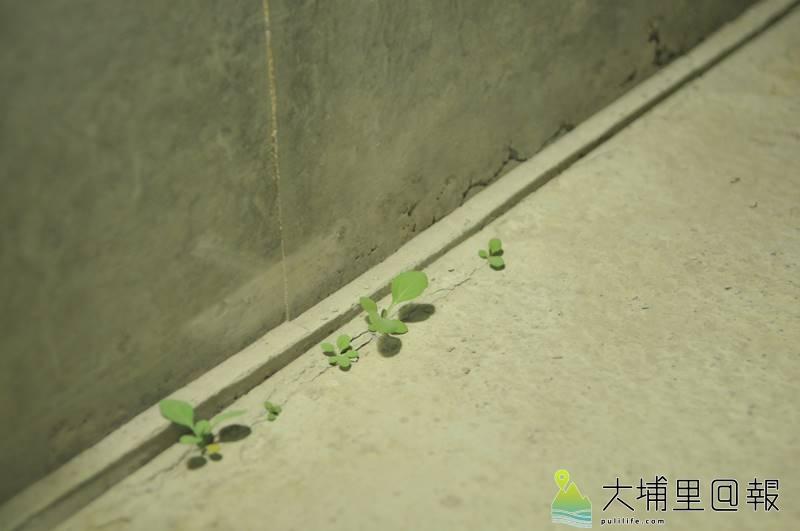 看得出來嗎?須田悅弘的木雕花草作品藏身在哪裡?(柏原祥 攝)