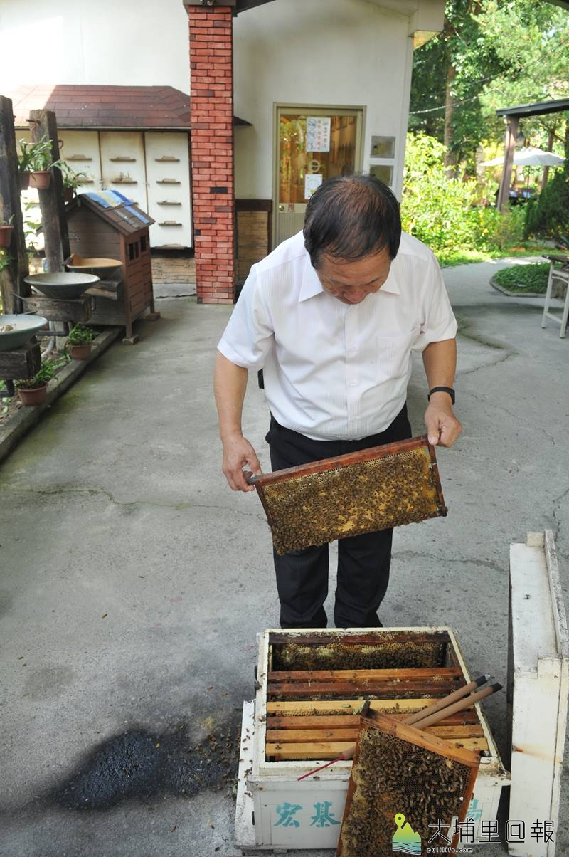 埔里地區蜜蜂大量死亡,連宏基蜜蜂農場的人工養殖巢片也不若以往豐厚。(柏原祥 攝)