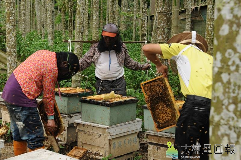 農藥施用氾濫,造成蜜蜂族群大量縮減,逐花而居的養蜂人,也感到生存空間愈來愈窘迫。(柏原祥 攝)
