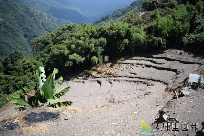 變作「高麗菜田」的Kmuyaw社舊址,因為採收季節的影響,上頭裸露著光禿禿的土壤