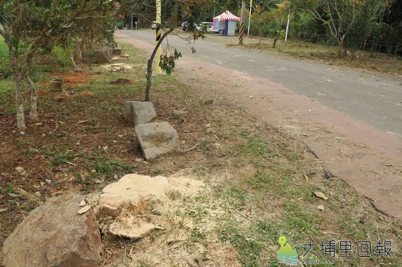 埔里鎮長周義雄派員至虎頭山砍樹,砍到南投林管處埔里事業區96林班地的樹,僅剩10公分高的殘幹。(柏原祥 攝)