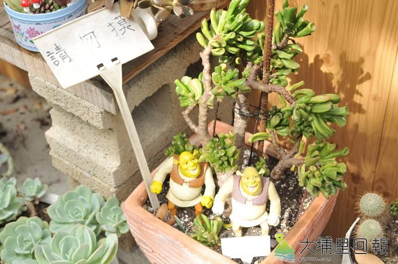 埔里鎮首度舉辦多肉植物市集,達人為每個盆栽命名相當有趣,圖為「史瑞克的耳朵」。(柏原祥 攝)