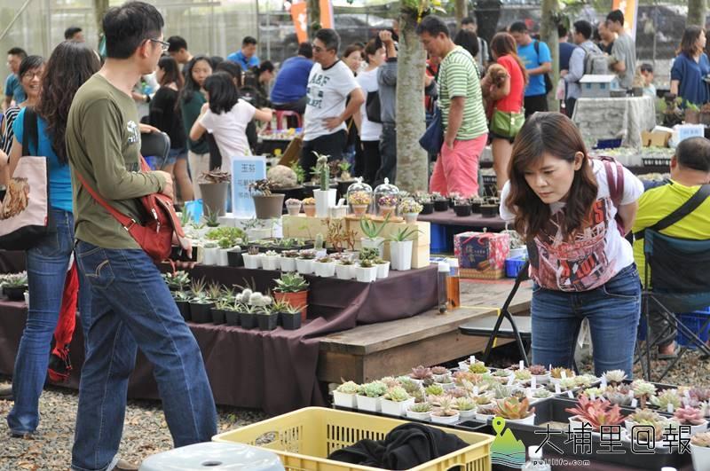 埔里鎮首度舉辦多肉植物市集,吸引許多愛「肉肉」的達人前來擺攤,民眾仔細觀察每具盆栽。(柏原祥 攝)