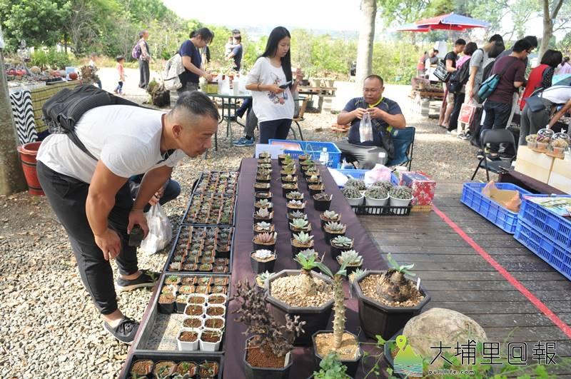 埔里鎮首度舉辦多肉植物市集,吸引許多愛「肉肉」的達人前來擺攤,愛肉人士仔細觀賞盆栽。(柏原祥 攝)