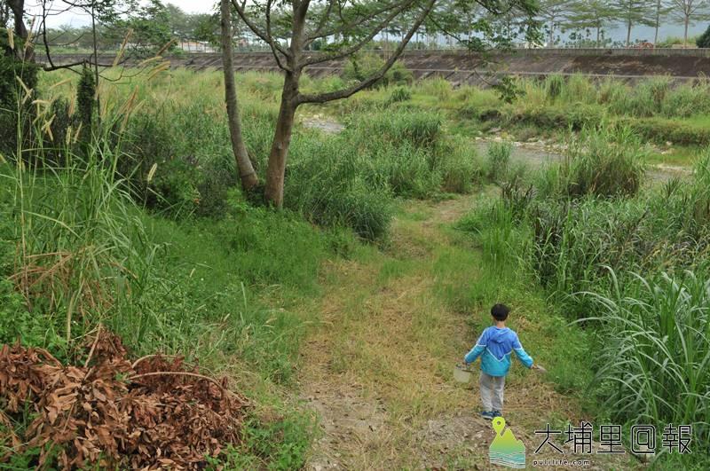 早期埔里鎮溪畔沙洲經常出現沙豬(蟻獅),小孩喜歡到溪邊釣沙豬當娛樂遊戲,這是許多老埔里人共同的兒時回憶。(柏原祥 攝)