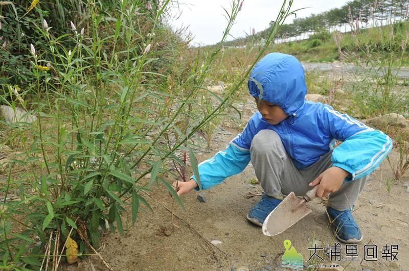 早期埔里鎮溪畔沙洲經常出現沙豬(蟻獅),小孩以草桿釣沙豬當遊戲,但因水文改變,這種古早娛樂變得相當罕見。(柏原祥 攝)