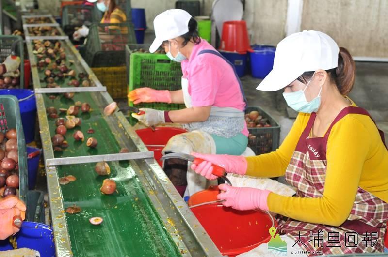 埔里鎮大坪頂納入南投農田水利會灌溉事業區,預計百香果產量及品質可以進一步提升。(柏原祥 攝)
