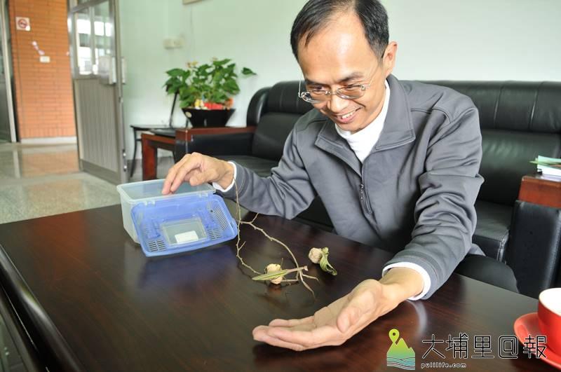 埔里鎮宏仁國中生物科老師李季篤說起昆蟲經不禁神采飛揚,養蟲是嗜好,也是做學問。(圖/李季篤提供)
