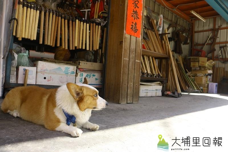 水根農具行裡的守護者與招財犬Lucky。(葛格 攝)