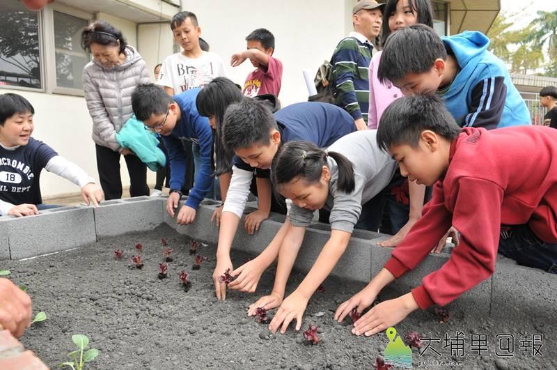 埔里鎮育英國小化身為食農教育基地,師生合力將各類菜苗種在菜圃裡。(柏原祥 攝)