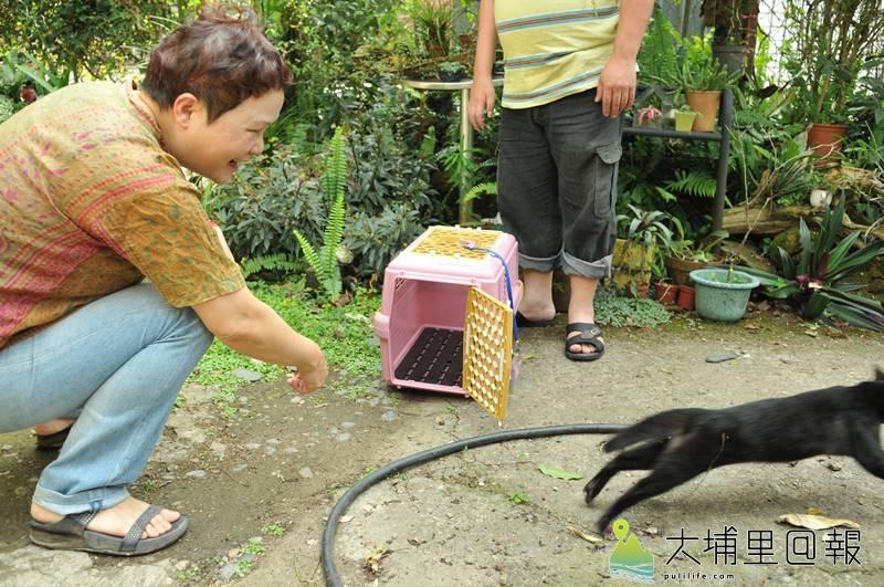 埔里鎮動保人士捉紮的流浪犬貓,會帶回原地放養。(柏原祥 攝)