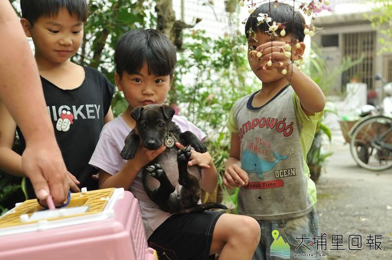 埔里鎮動保人士捉紮的流浪犬貓,會帶回原地放養,圖為領養小動物的小朋友。(柏原祥 攝)