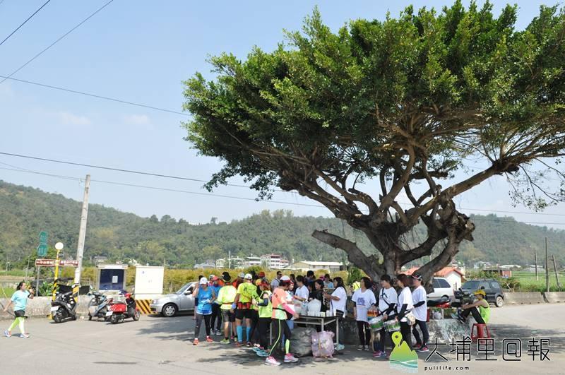 埔里山城派對馬拉松全馬路線中,埔里金城武樹是休息站之一。(柏原祥 攝)