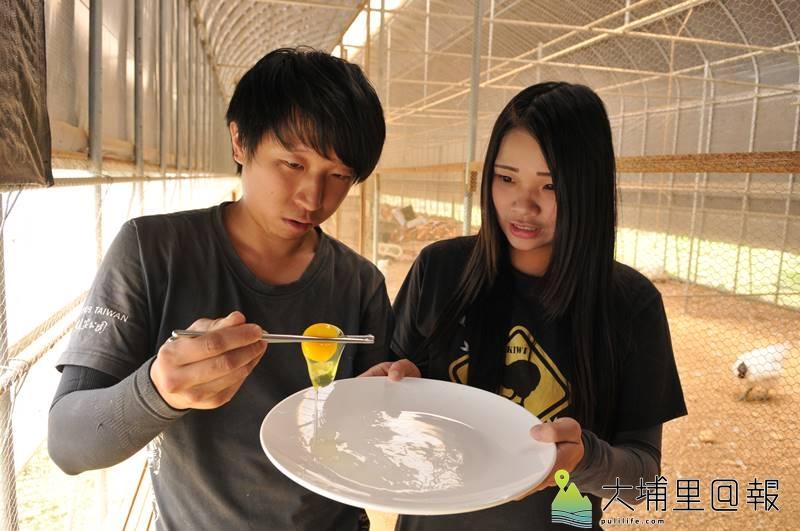 廖健棠等埔里青農打造自然農業雞舍,生產的雞蛋相當結實,筷子挾蛋黃竟不會破裂。(柏原祥 攝)