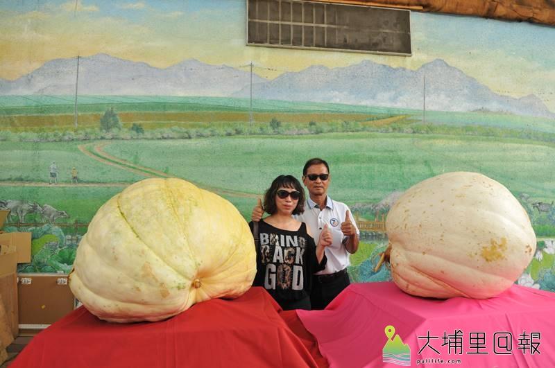 來自史港里的何振春夫婦,在埔里鎮農會舉辦大南瓜競賽獲得冠軍。(柏原祥 攝)