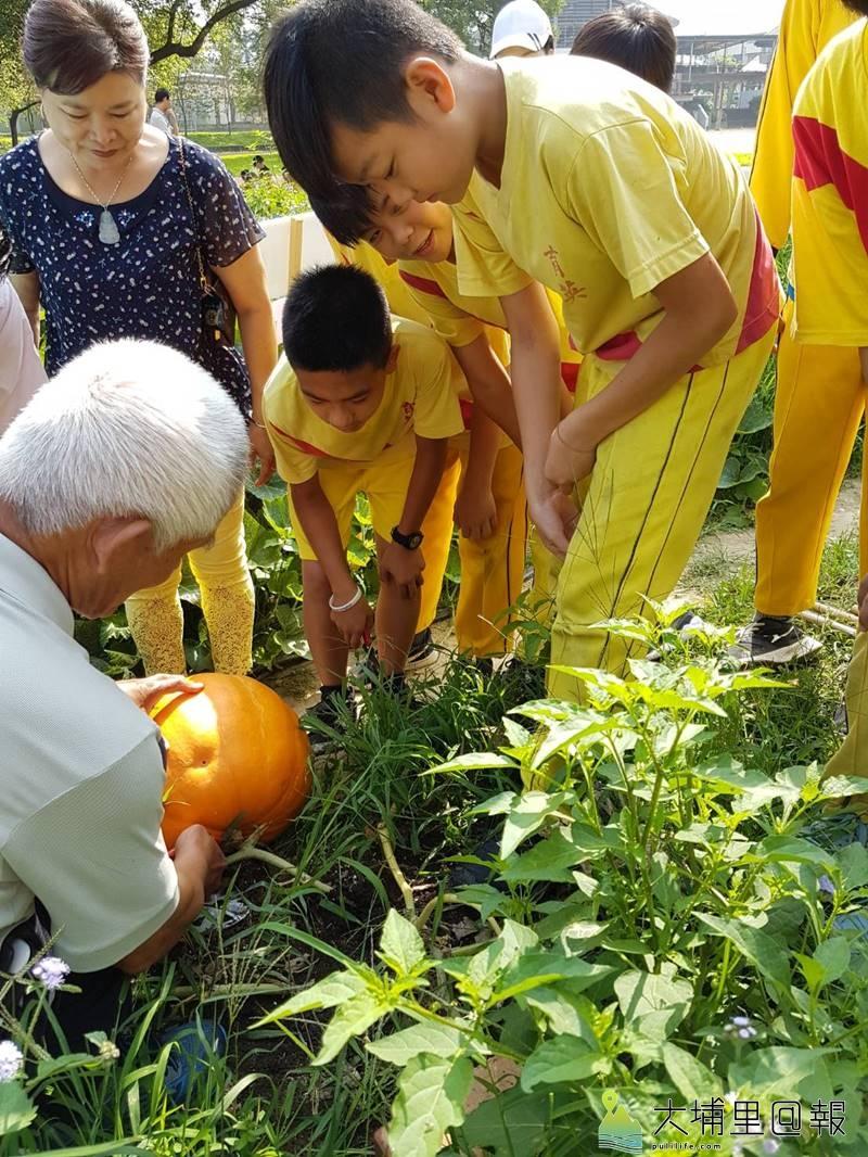 埔里鎮農會舉辦大南瓜競賽,育英國小在專業農友指導下種下大南瓜。(圖/埔里鎮農會提供)