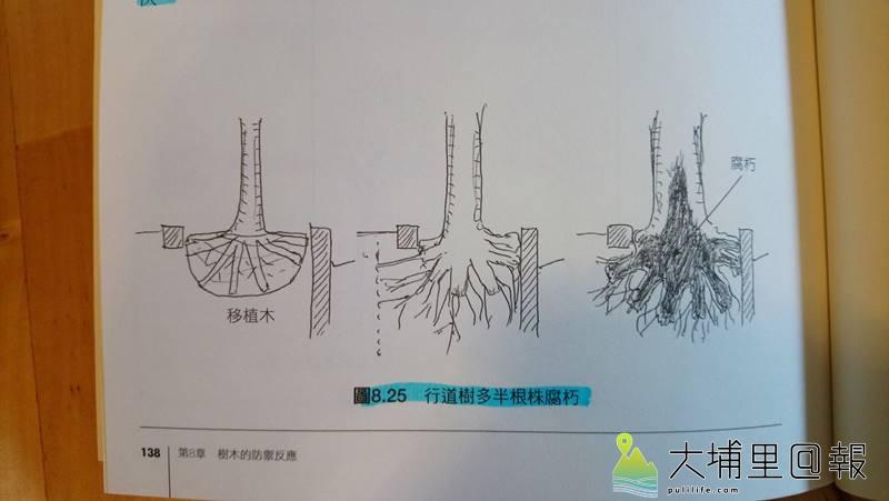 日本樹木生態研究會代表理事樹木醫生─崛 大才先生撰寫的「繪圖解說樹木的知識」一書,分析行道樹多半根株腐朽的原因。