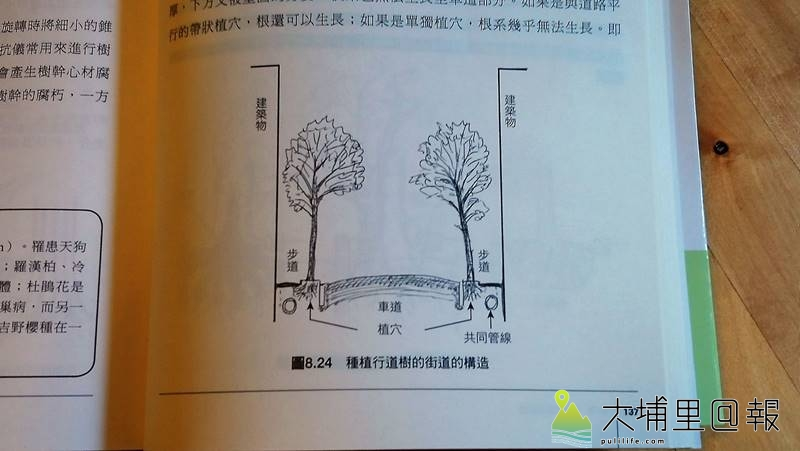 日本樹木生態研究會代表理事樹木醫生─崛 大才先生撰寫的「繪圖解說樹木的知識」一書,說明種植行道樹街道的構造。