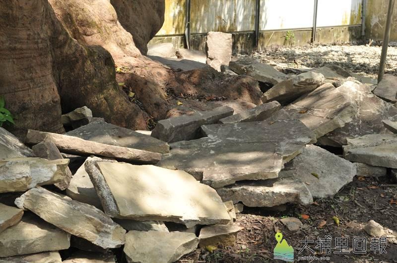 埔里茄苳樹王公因地主同意交由興南宮託管,圍籬拆除,並進行棲地整理,廟方先除掉覆蓋地面的水泥,擴充樹根呼吸的空間。(柏原祥 攝)