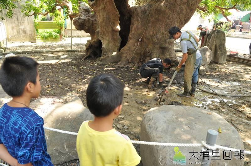 埔里茄苳樹王公救援行動啟動,救樹人員以高壓水刀挖掘氣穴,清理土壤裡的石頭,小朋友看得特別專注。(柏原祥 攝)