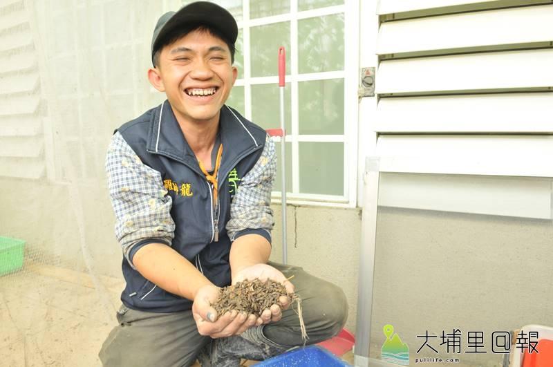 國姓青農羅帥龍收集廚餘養殖黑水虻,種植高經濟價值作物與養魚。(柏原祥 攝)