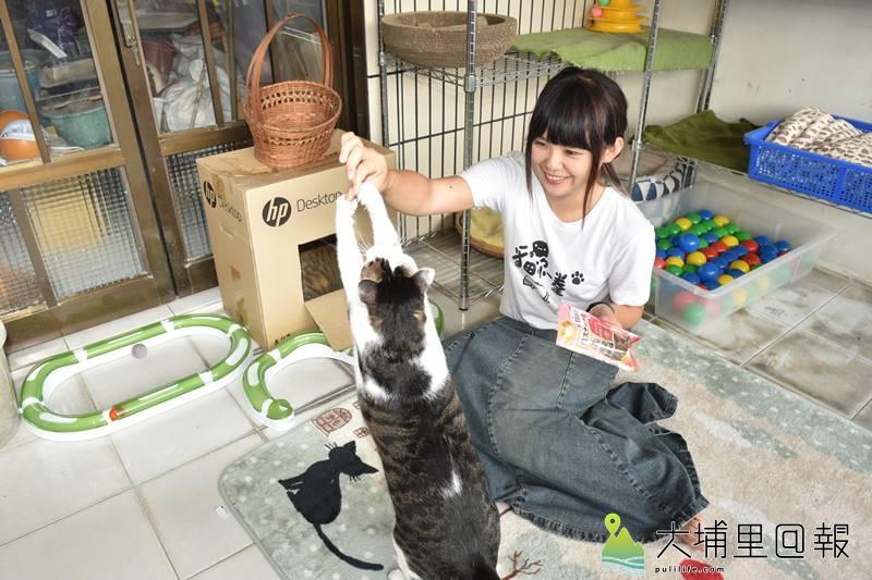 心理諮商輔導師陳小藍打造手作貓樂園,3隻貓咪可愛的模樣療癒了她,帶來了生活溫暖與樂趣。(柏原祥 攝)