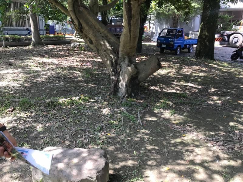 埔里國小特色遊具規劃用地現況。